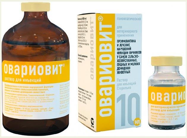 Ложная беременность у мопсов лечится препаратом овариовит, примерно 2 недели