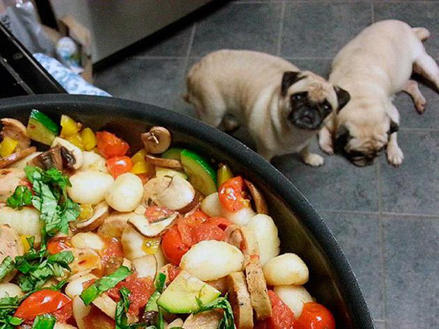 Если кормление мопса производиться натуральной пищей, то она должна быть сбалансирована и разнообразна