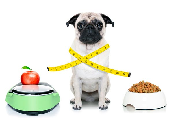 Витамины и минералы важны так же, как и правильное питание, поэтому сбалансируйте эти два критерия
